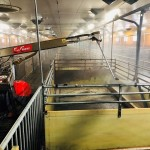 Robot automat EVO Cleaner - spalare adapost porci